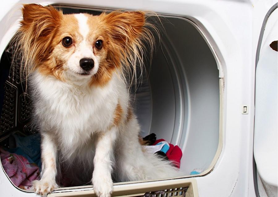 Comment enlever les poils de chien de la machine à laver ?